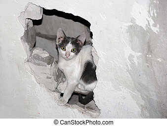 Cat in the Hole. A homeless cat sitting in a hole in the...
