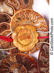 seal - A golden seal on ammonites