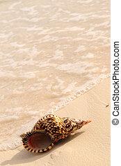 Seashell and ocean wave on sandy tropical beach