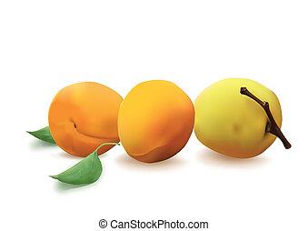 Apricots - Three apricots