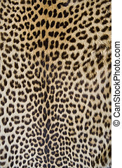 leopard skin - detail of a leopard skin jacket