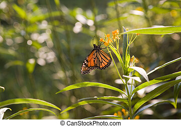 3500 - A butterfly in an overgrown post Katrina backyard in...