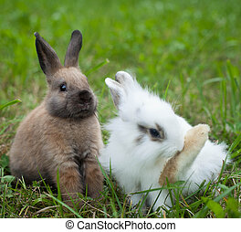 Rabbits in the grass