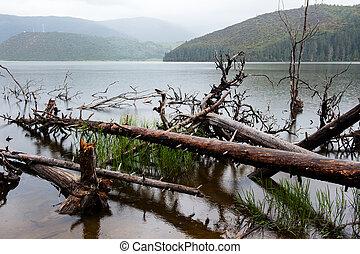 Fallen dead tree in the lake