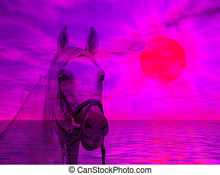 Horse portrait in the sunset - Horse portrait on a colorful...