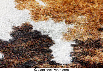 cowhide dapple background - close up of cowhide dapple...