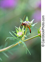 parasitic wasp - A parasitic wasp lurches over a flower bud....