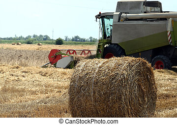 Harvesting at the summer field
