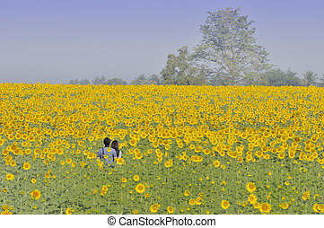 A couple in a flower field - It is a bright sunny day. A...