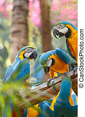 colorful macaw on the tree - group of colorful macaw on the...