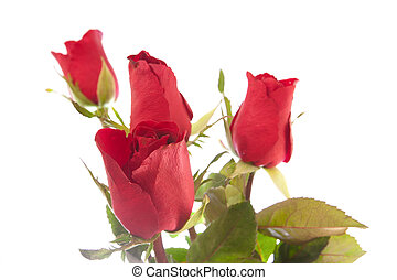 valentine Red Roses Bouquet isolated