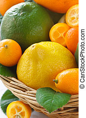Citrus. - Fresh citrus fruit with leaves in a wicker basket.