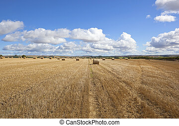harvest time bales - an agricultural harvest time scene in...