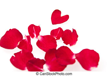beautiful of red roses petals in heart shape isolated on...