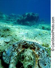 underwater landscape - Underwater landscape with octopus in...