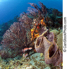 Sponges and Soft Coral