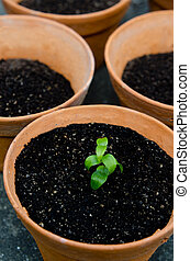 Planting a plant - New fresh plant in a pot