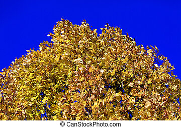 Autumn gold leaves background