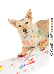Happy alert dog artist - Happy alert jack russel terrier dog...