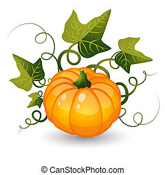 Pumpkin with leaves on a white background