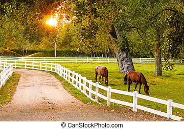 Horses at dusk - Some horses grazing in a pasture during...