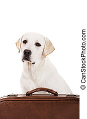 Dog with a suitcase