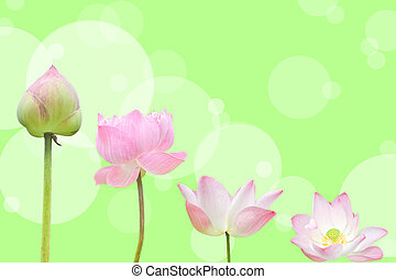 pink water lily flower lotus and green background