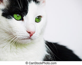 gato, verde, olhos