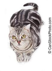 Cute tabby cat looking up