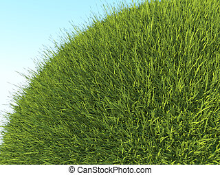 Green planet: close up of fresh grass and blue sky