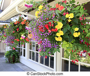 Many hanging baskets with flowers outside of house windows -...