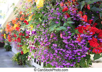 Flowers in hanging basket with white window and brown wall