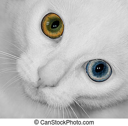 the wall eyed cat
