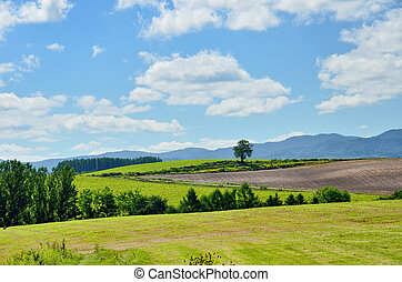 Vast landscape of Biei, Hokkaido in summer