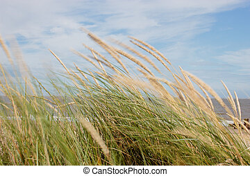Wind blown dune grasses, with slow shutter speed to show...