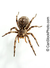 tarantula - Not all people equally well concern to spiders