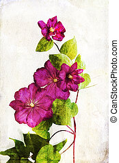 Watercolored crimson clematis - Illustration of watercolor...