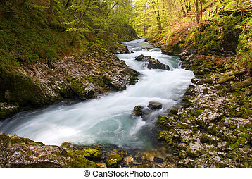 river in green forest in vintgar - slovenia
