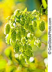hop with colorful, blurred background