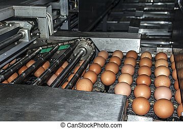 Industrial plant selection for egg - Transportation and...