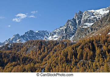 autumn colors - Alp Devero - autumn colors and mountain with...