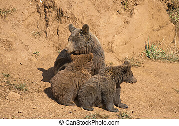 Bear with her cubs