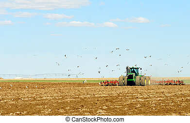 Gulls following the plow
