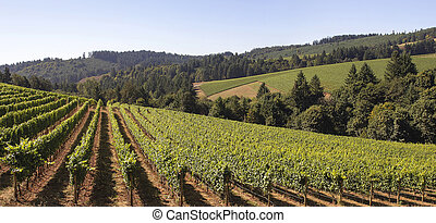 Winery Vineyard Landscape - Winery Grapes Vineyard Landscape...