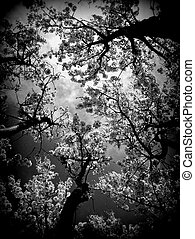 Black and White Trees - Black and White contrast trees in...