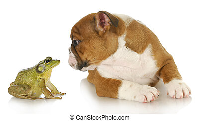 cute puppy with bullfrog - bulldog and bullfrog - english...