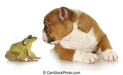 cute puppy with bullfrog - bulldog and bullfrog - english...