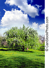 Blossom apple-trees garden at the spring. Sun at the sky.