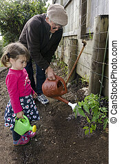 Grandpa and grandchild planting tomato plant - Great grandpa...
