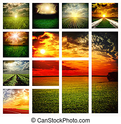 Beautiful fields collage